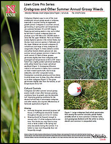 Crabgrass & Other Summer Annual Grassy Weeds