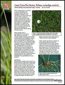 Yellow Nutsedge Control