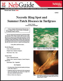 Necrotic Ring Spot and Summer Patch Diseases in Turfgrass