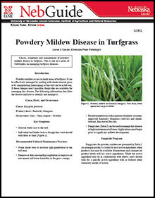 Powdery Mildew Disease in Turfgrass