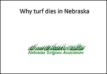 why turf dies image