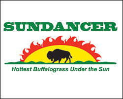 Sundancer Buffalograss logo