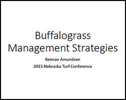 Buffalograss Management Strategies