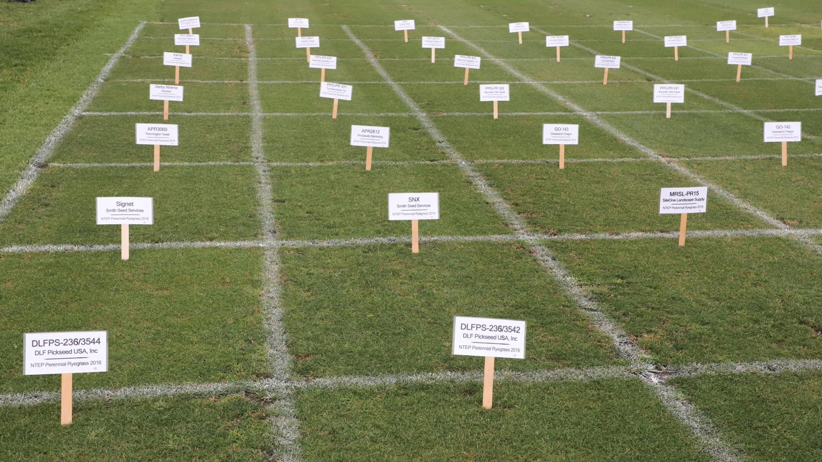 Turfgrass Research